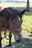 Kind, das ein Bauernhofpferd streichelt Stockbild