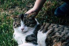 Kind, das eine Katze auf dem Rasen streichelt stockfoto
