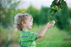 Kind, das einen Apfel auswählt Stockfotos