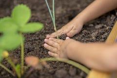 Kind, das einen Jungpflanzesämling pflanzt Stockfoto