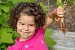 Kind, das frische organische Karotten auswählt Lizenzfreies Stockbild
