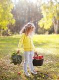 Kind, das Korb mit den Äpfeln gehen in Herbst hält lizenzfreie stockbilder