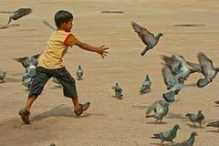 Kind, das mit Taube spielt Lizenzfreie Stockfotos