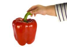 Kind, das roten Paprika anhält Stockfotografie