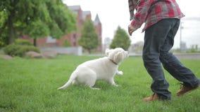 Kind, das seinen Haustiertierfreund streicht und umarmt Kleiner Junge, der mit seinem Hund im Park spielt stock footage