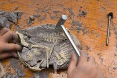 Kind, das Spinosaurus-Knochen ausgräbt stockfotografie