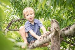 Kind, das von einem Baum lächelt Stockfotografie