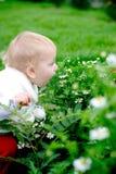 Kind dat camomiles ruikt Royalty-vrije Stock Afbeeldingen