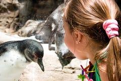 Kind dat in Penquin bekijkt royalty-vrije stock afbeelding