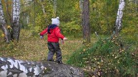 Kind in de herfstpark die en pret hebben die, die in de verse lucht lopen spelen lachen Gevallen Boom Een mooie toneelplaats stock video