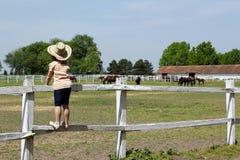 Kind de status drijven en het letten op de paarden bijeen royalty-vrije stock fotografie