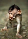 Kind der Affen Stockfotos