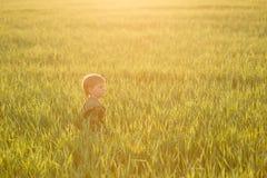 Kind in der Wiese im hohen Gras bei Sonnenuntergang Stockfoto