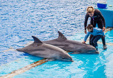 Kind in Dichte Ontmoeting met Dolfijnen Royalty-vrije Stock Foto's