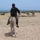 Kind die een ezel berijden Stock Fotografie