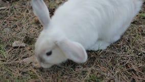 Kind die het konijn petting stock footage