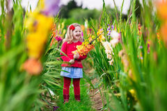 Kind die verse gladiolenbloemen plukken Stock Fotografie