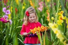 Kind die verse gladiolenbloemen plukken Royalty-vrije Stock Foto