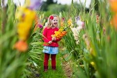 Kind die verse gladiolenbloemen plukken Royalty-vrije Stock Foto's