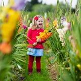 Kind die verse gladiolenbloemen plukken Royalty-vrije Stock Afbeeldingen