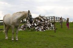 Kind en paard Stock Foto