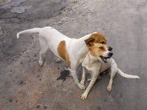 Kind för hund` s som är fräck mot kamratskap fotografering för bildbyråer
