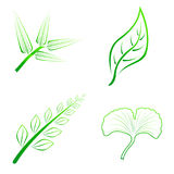 Kind of four leaves. Are bamboo fern ginkgo and normal leaves Stock Images