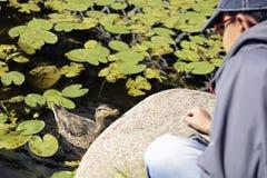 Kind geben die Fütterung einer Ente Stockfotos