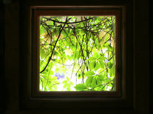 Kind on green leaves from window of dark room. Royalty Free Stock Photos