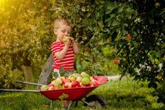 Kind het plukken appelen op een landbouwbedrijf Weinig jongen die in de boomgaard van de appelboom spelen Het fruit van de jong g royalty-vrije stock afbeeldingen