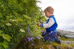 Kind het plukken bloemen Stock Afbeeldingen