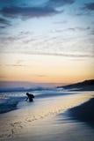 Kind het spelen op het strand bij zonsondergang stock afbeeldingen