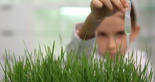 Kind im Chemie-Labor, Schulwissenschafts-Experiment, wachsende Weizen-Sämlinge 4K stock video footage
