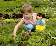 Kind im Gemüsegarten stockbild