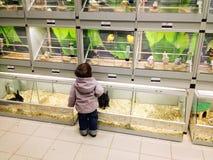 Kind im Geschäft für Haustiere Stockbilder