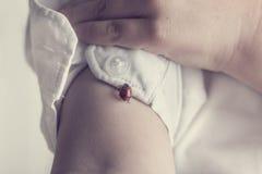 Kind im weißen Hemd, das mit einem roten Marienkäfer spielt Stockfotografie