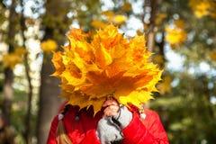 Kind met gele bladeren, een boeket van gele bladeren, gevallen weiland Royalty-vrije Stock Foto