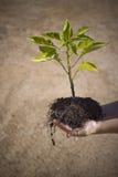 Kind met kleine boom in handen royalty-vrije stock afbeeldingen