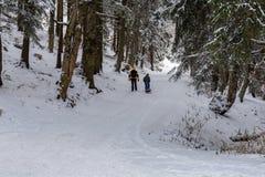 Kind mit dem Elternteil, das im Wald in Winter, Siebenbürgen, Rumänien geht lizenzfreie stockbilder