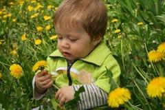 Kind mit dem Löwenzahn Stockbilder