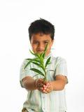 Kind mit einem Schössling Lizenzfreie Stockfotografie
