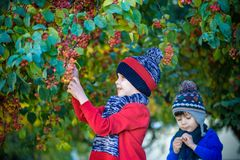 Kind op een landbouwbedrijf in de herfst Weinig jongen en zijn broervriend die in de decoratieve boomgaard van de appelboom spele stock foto's