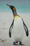 Kind Penguin on a Sandy Beach Stock Photos