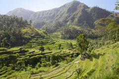 Kind on rice terraces, Bali, Indonesia Royalty Free Stock Photo