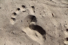 Kind-` s Abdruck im Sand Stockbilder