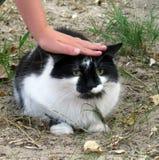 Kind` s hand die een kat strijken stock foto's