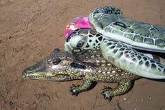 Kind-` s Spiele auf dem sandigen Strand, dem Krokodil und der Schildkröte lizenzfreie stockfotos