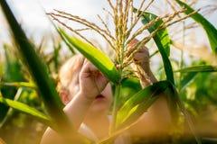 Kind-` s Weg im Mais das Mädchen im Mais abenteuer Stockfotos