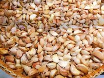 Kind of Thai garlic Stock Image
