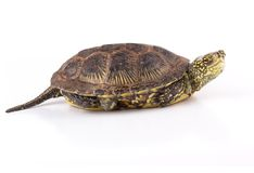 Kind turtle Royalty Free Stock Image